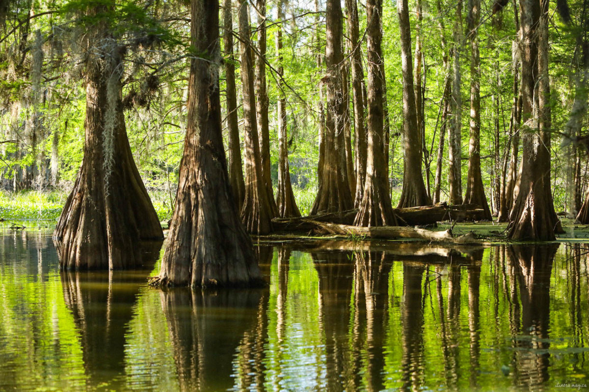 Plongez au coeur des bayous de Louisiane et des plantations, entre alligators et swamp tours. Immersion mythique en #Louisiane. Trouver le meilleur swamp tour.
