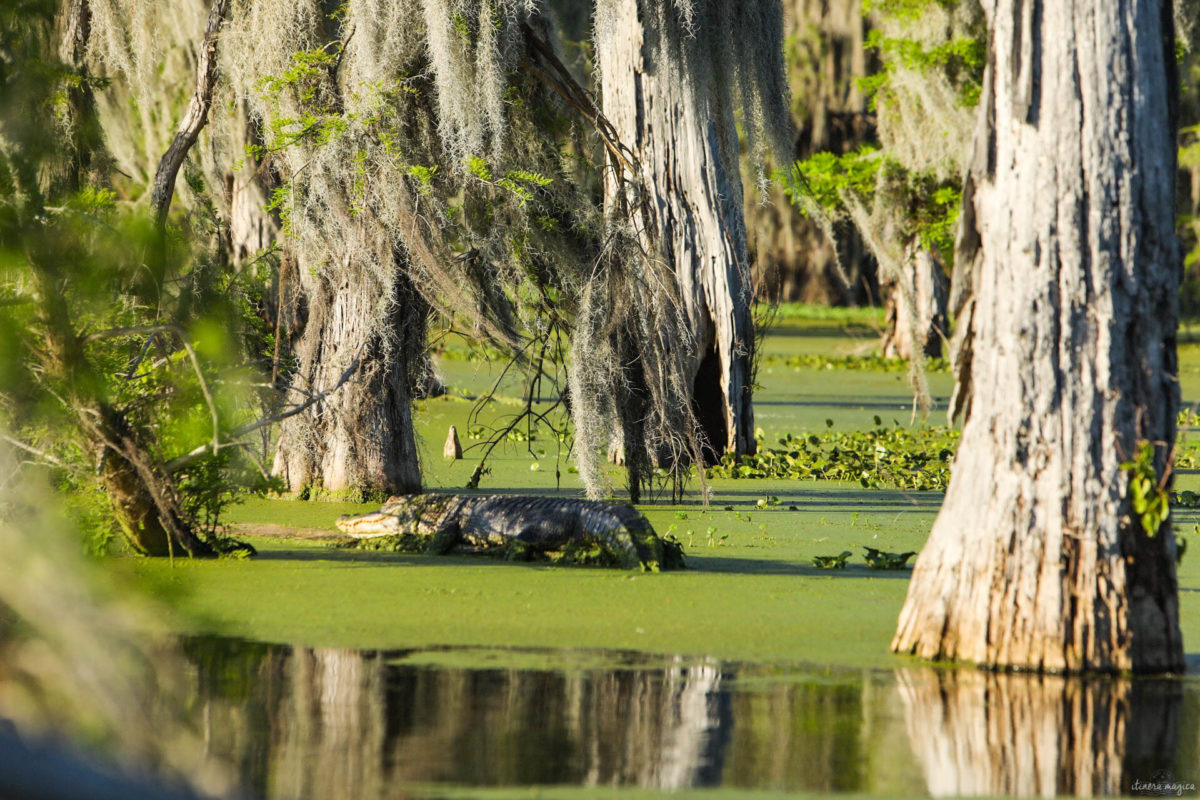 Plongez au coeur des bayous de Louisiane et des plantations, entre alligators et swamp tours. Immersion mythique en #Louisiane.