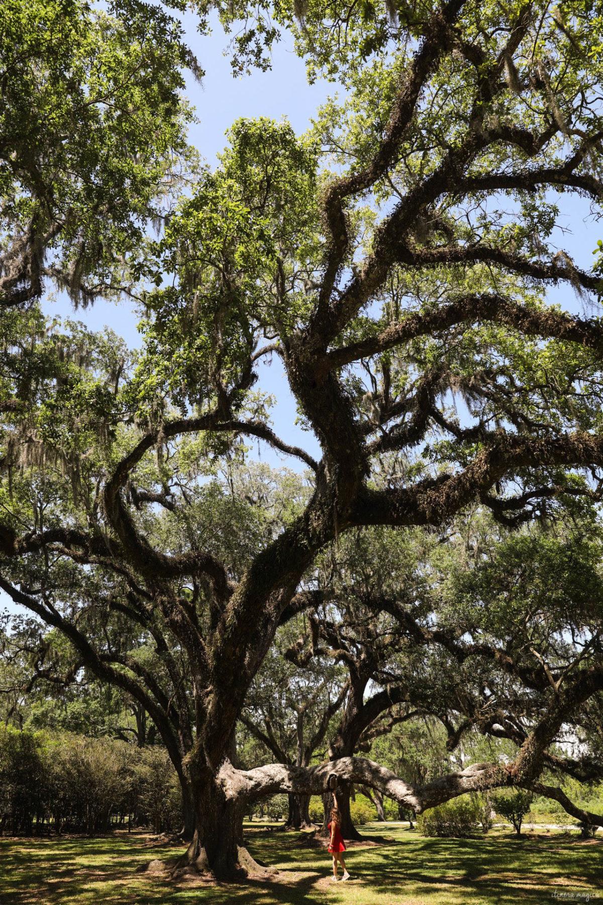 Avery Island, Louisiana. Les fabuleux chênes de Virginie d'Avery Island.