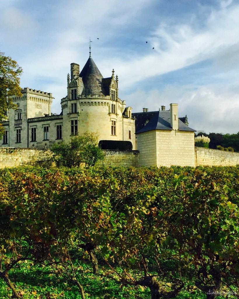Les vignes qui entourent le château de Brézé