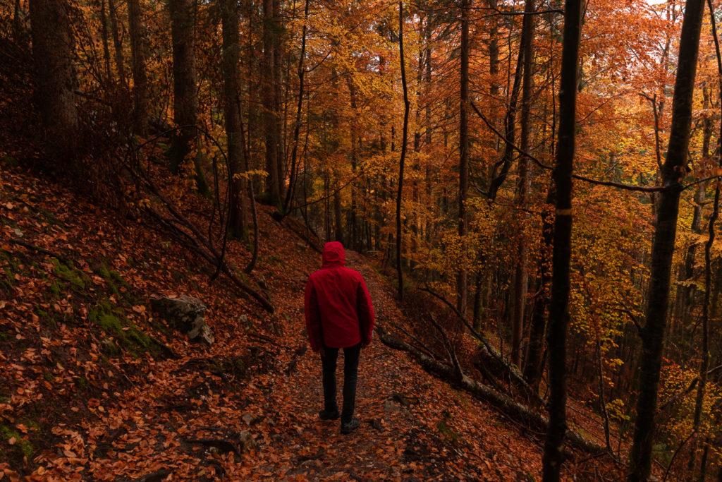 Voir l'automne en Chartreuse