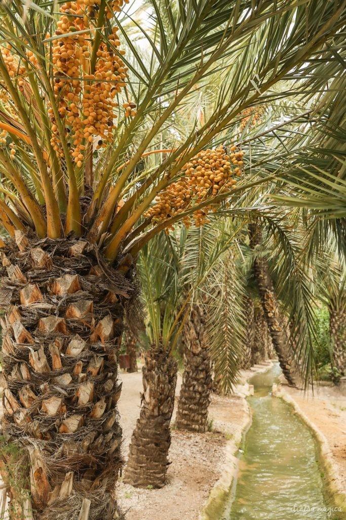 Visiter Elche en Espagne : la plus grande palmeraie d'Europe, la gastronomie du sud de l'Espagne, le mystère d'Elche, les plages d'Elche...