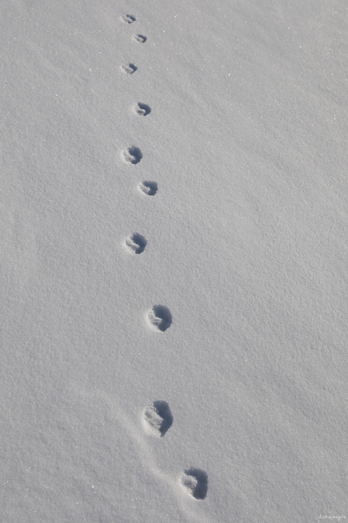 Vie sauvage à Kangerlussuaq