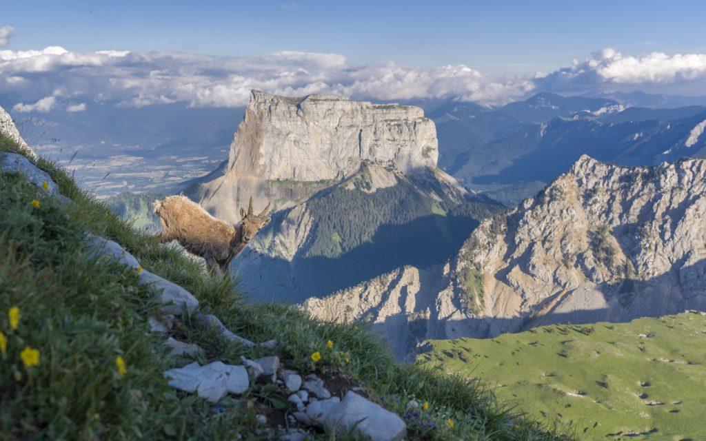 carte postale des alpes
