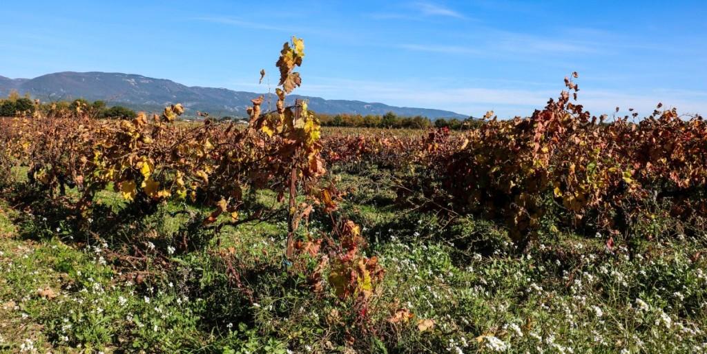 Weingut, mit dem Lubéron Gebirge im Hintergrund.