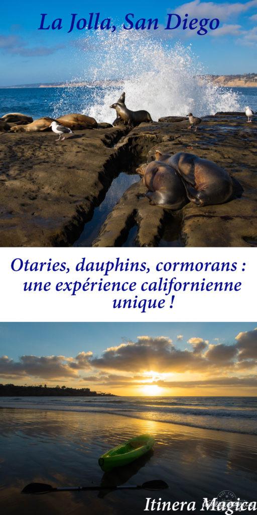Voyage à San Diego : ne manquez pas La Jolla ! Jouer avec les otaries en toute liberté, faire du kayak au milieu des phoques… une destination californienne nature ! Travel in La Jolla, California